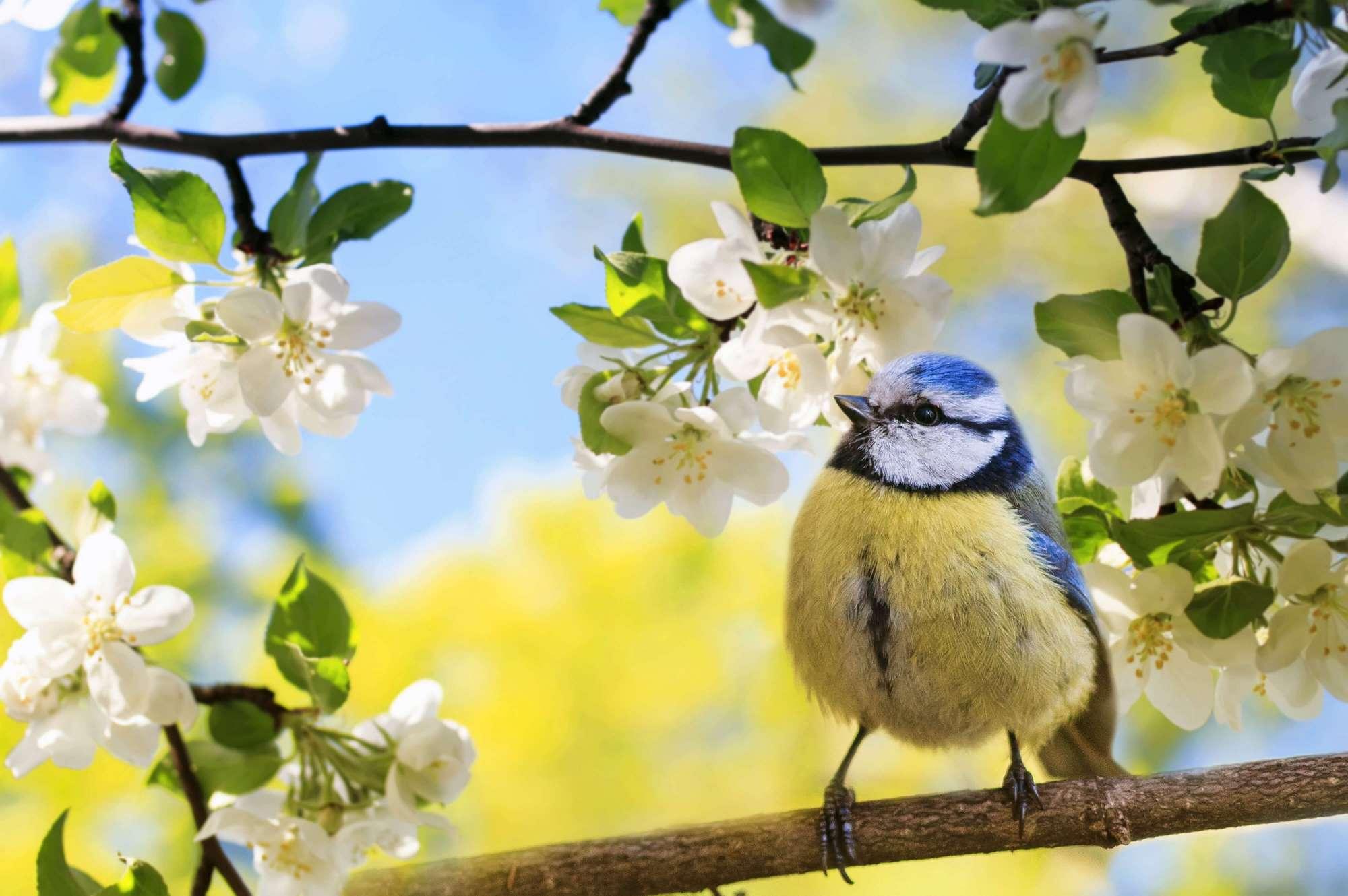 Avril et mai au jardin : De petits travaux pour de grands résultats